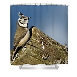 On The Edge Shower Curtain by Torbjorn Swenelius