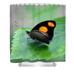 On The Leaf Shower Curtain