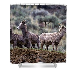 On The Ledge Shower Curtain by Mike  Dawson