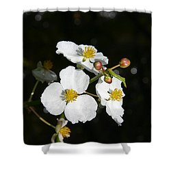Shower Curtain featuring the photograph On The Shore Line by Denyse Duhaime