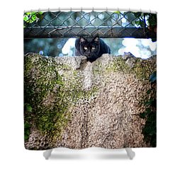 Shower Curtain featuring the photograph On The Wall by Laura Melis