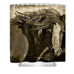 On The Winds Of Time Shower Curtain