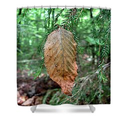 On The Wrong Tree Shower Curtain