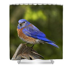 On Top Of The World Shower Curtain by Jean Noren