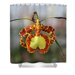 Oncidium Dancing Lady  Shower Curtain by Venetia Featherstone-Witty