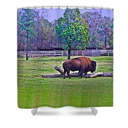 One Bison Family Shower Curtain