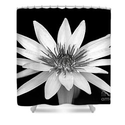 One Black And White Water Lily Shower Curtain by Sabrina L Ryan
