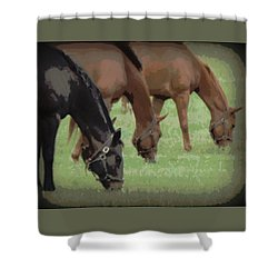 One Black Horse 1 Shower Curtain