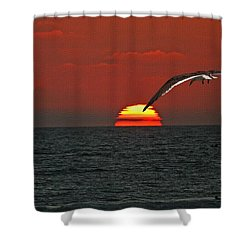 One Black Skimmers At Sunset Shower Curtain by Tom Janca