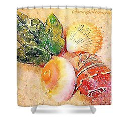 All The Beautiful Shells Shower Curtain