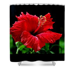 One Day Flower Shower Curtain