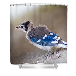 one day...I will fly Shower Curtain