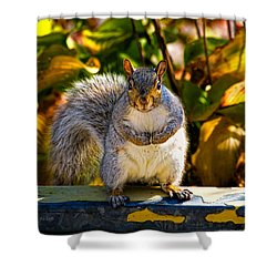 One Gray Squirrel Shower Curtain