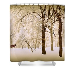 One Horse Open Sleigh Shower Curtain by Jessica Jenney