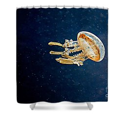 One Jelly Fish Art Prints Shower Curtain