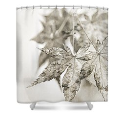 One Misty Moisty Morning Shower Curtain by Caitlyn  Grasso