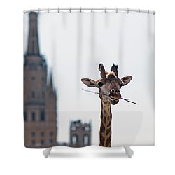 One More Bite To Outgrow The Tallest 4 Shower Curtain by Alexander Senin