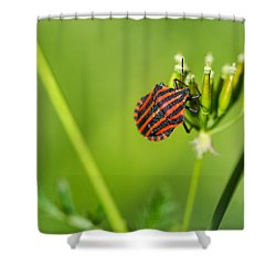 One More Bottle Doesn't Hurt - Featured 3 Shower Curtain by Alexander Senin
