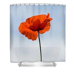 One Poppy Shower Curtain by Anne Gilbert