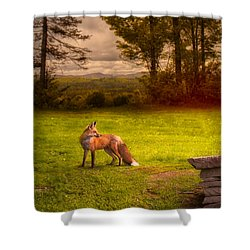 One Red Fox Shower Curtain by Bob Orsillo