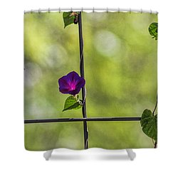 One Shower Curtain by Tammy Espino