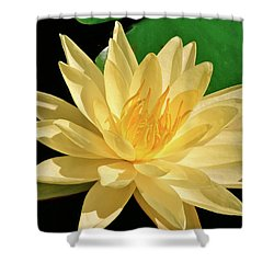 One Water Lily  Shower Curtain by Ed  Riche