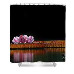 One Water Lily Shower Curtain by Sabrina L Ryan