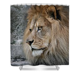 Shower Curtain featuring the photograph Onyo #11 by Judy Whitton