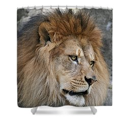 Shower Curtain featuring the photograph Onyo #4 by Judy Whitton