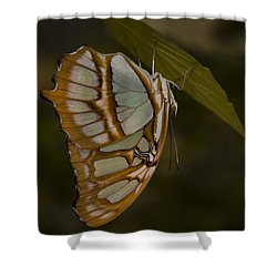 Opal Shower Curtain by Penny Lisowski