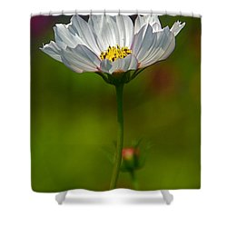 Shower Curtain featuring the photograph Open For All by Byron Varvarigos