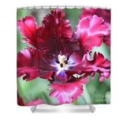 Opened Tulip Shower Curtain by Kathleen Struckle