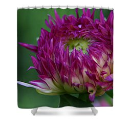 Shower Curtain featuring the photograph Opening Day by Denyse Duhaime