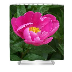 Shower Curtain featuring the photograph Peony  by Eunice Miller