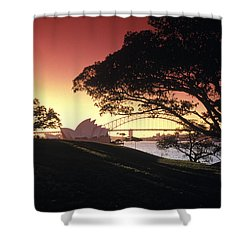 Opera Tree Shower Curtain by Sean Davey