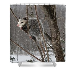 Opossum In A Tree Shower Curtain