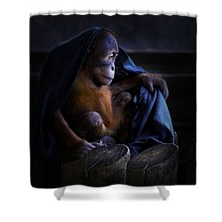 Orang Utan Youngster With Blanket Shower Curtain by Peter v Quenter