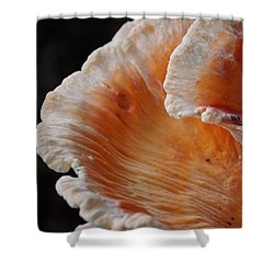 Orange And White Fungi Shower Curtain by Jane Ford