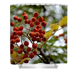 Orange Autumn Berries Shower Curtain