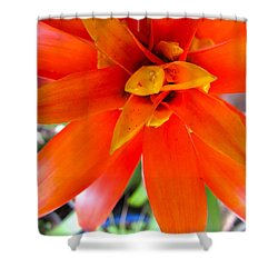 Orange Bromeliad Shower Curtain
