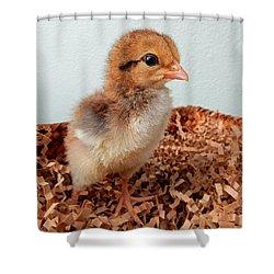 Orange Chick Shower Curtain