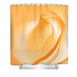 Shower Curtain featuring the photograph Orange Cream Rose by Chris Anderson
