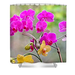 Warbler On Orchards Photo Shower Curtain