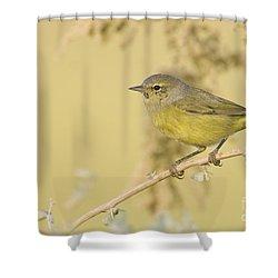 Orange Crowned Warbler Shower Curtain by Bryan Keil