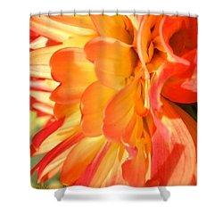 Orange Dahlia Shower Curtain by Anna Porter