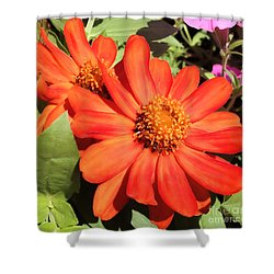 Orange Daisy In Summer Shower Curtain by Luther Fine Art