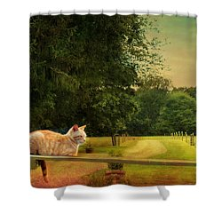 Orange Farm Cat Shower Curtain