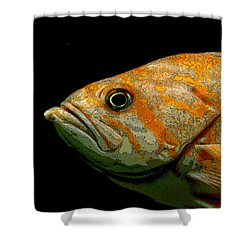 Orange Fish Shower Curtain by Art Block Collections