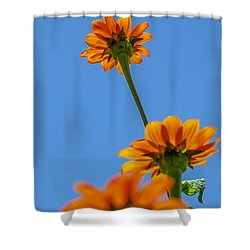 Orange Flowers On Blue Sky Shower Curtain