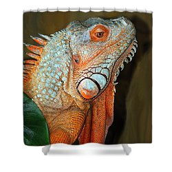 Shower Curtain featuring the photograph Orange Iguana by Patrick Witz